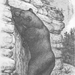 3. L'ours de Pinsec.jpg